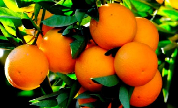 Les produits agricoles alimentaires et de la pêche maritime affichent de bonnes performances à l'export