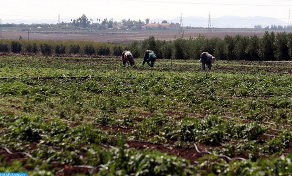 """Le PIB agricole continuerait à montrer """"une bonne résilience"""""""