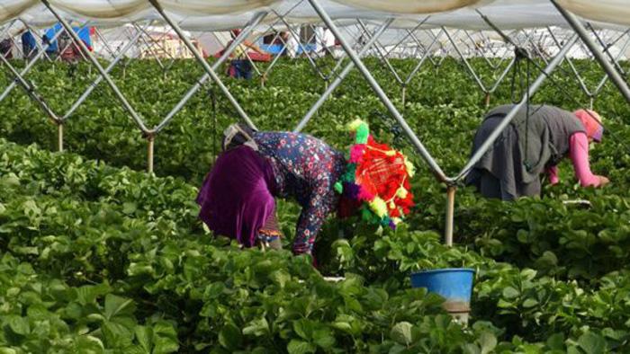7000 saisonnières marocaines bloquées à Huelva début  juin