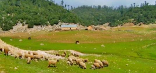 Azrou se dote d'un marché pilote de bétail