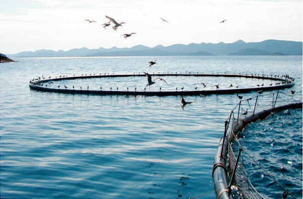 La consommation de poissons devrait être  plus importante durant la prochaine décennie