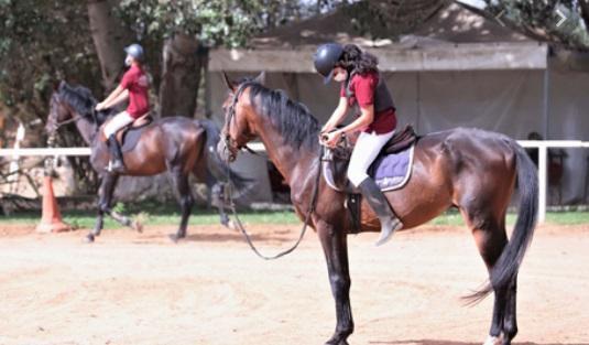 Sports équestres: Les chevaux reprennent du collier après trois mois de confinement