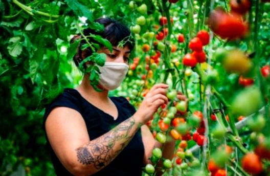 Aubergines et tomates prennent de la hauteur sur les toits de Montréal