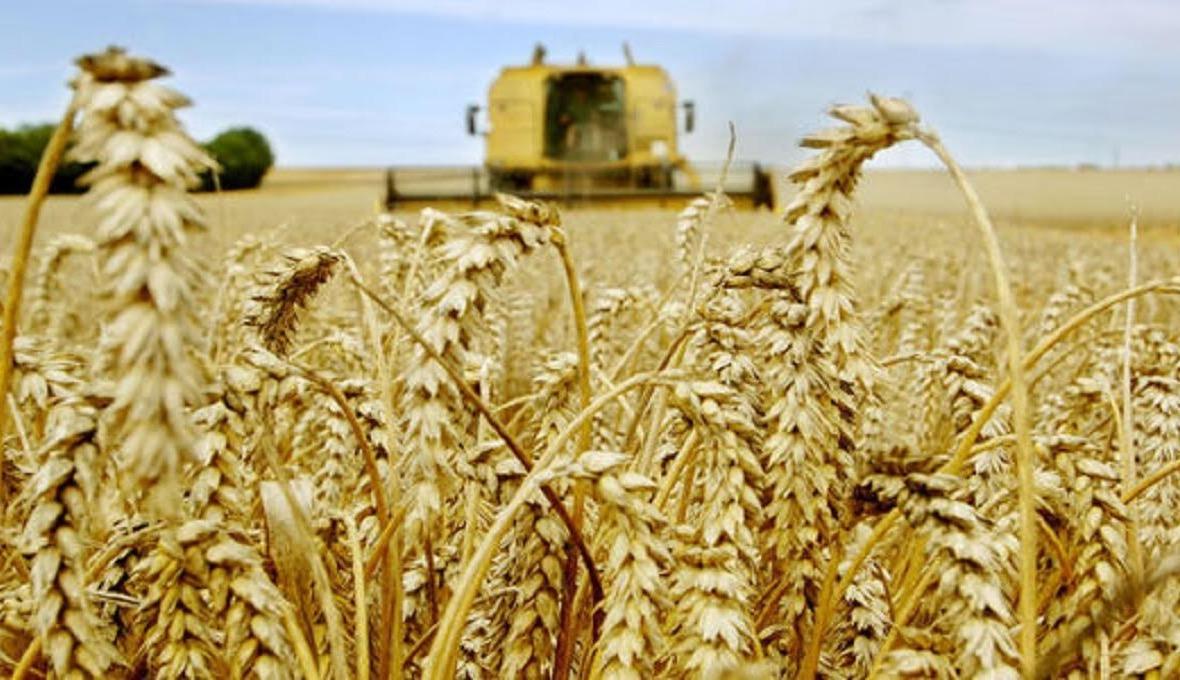 La production céréalière nationale accuse une forte baisse à 32 millions de quintaux