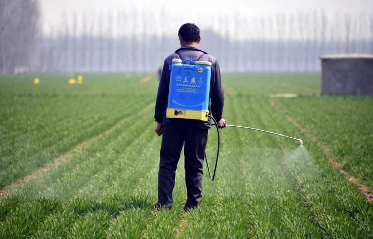 Des pesticides interdits exportés vers le Maroc