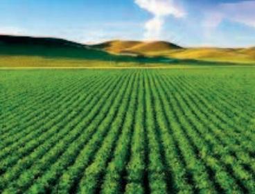 L'agriculture marocaine fait preuve de résilience et d'agilité