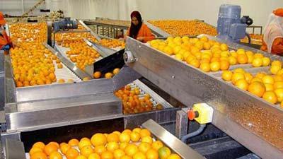 Des perspectives prometteuses pour les exportations des produits agricoles