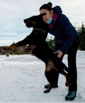 Les Tchèques préparent les chiens pour combattre la Covid-19