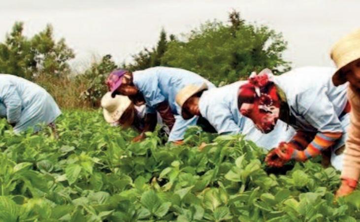Le taux de participation de la main d' œuvre féminine marocaine peine à se redresser