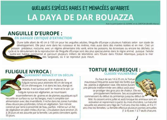 Creuset de biodiversité, la zone humide de Dar Bouazza menacée
