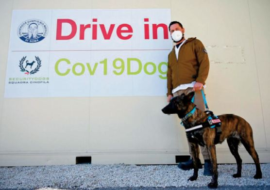 Des chiens s ' entraînent à détecter la Covid chez les humains