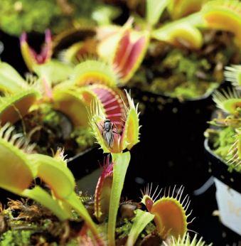 """""""Robots-plantes """" : Des scientifiques cherchent à combiner technologie et nature"""