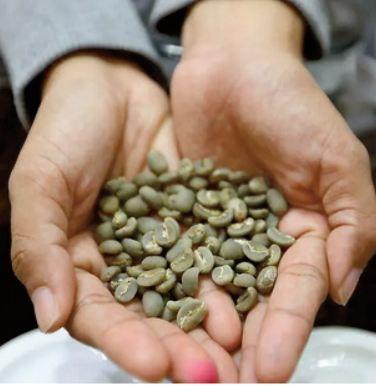 Le parfum d'espoir d' une espèce de café oubliée