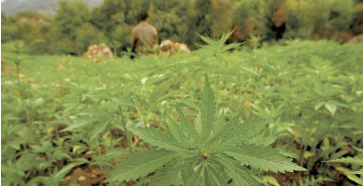 La légalisation du cannabis suscite appréhension et explication