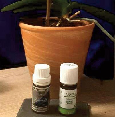Quelles huiles essentielles pour soigner rapidement un mal de gorge ?