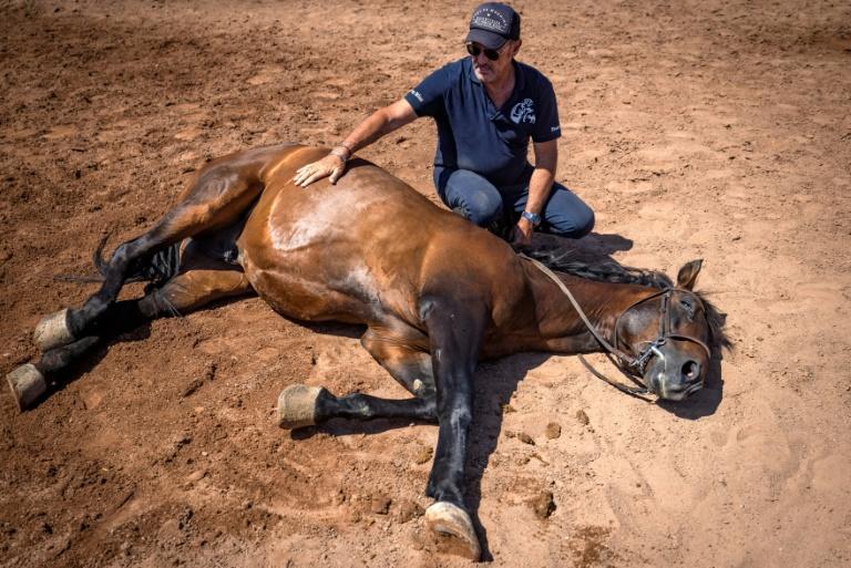 Tournage de films étrangers au Maroc: L'homme qui murmure à l'oreille des chevaux du 7ème Art