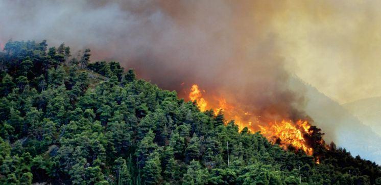 Sur les hauteurs de Béni Mellal, une forêt de pins en proie à un incendie
