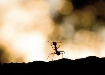 Chasser les araignées des maisons avec des fourmis