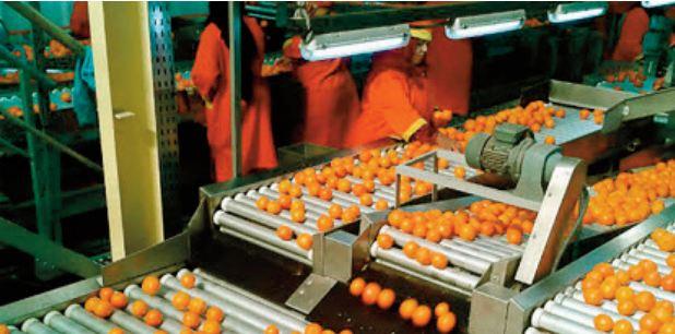 L'agroalimentaire enregistre une performance remarquable