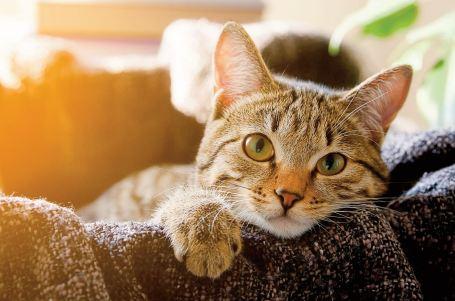 Les chats seraient inaptes socialement pour rester aux côtés de leur maître