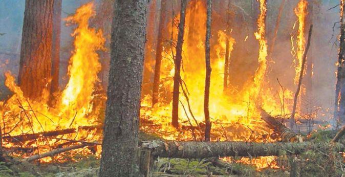 Les dégâts de la canicule: 1.200 ha de forêts incendiés