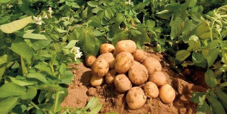 Action mondiale pour le développement vert des produits agricoles spéciaux