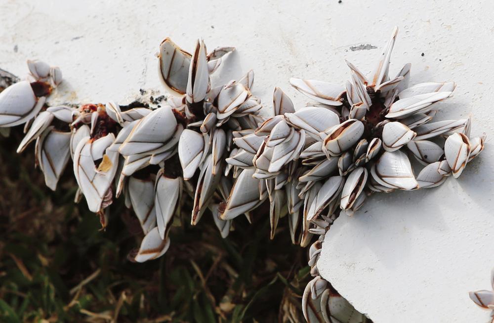 De petits crustacés pourraient aider à résoudre le mystère du vol MH370