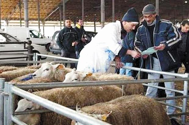 Le rituel du sacrifice du mouton fait débat en Belgique