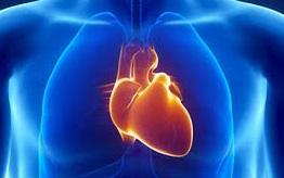 Une mutation génétique permet au cœur de s'adapter au manque d'oxygène