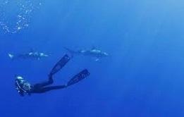 Capturer du CO2 est inefficace contre l'acidification des océans