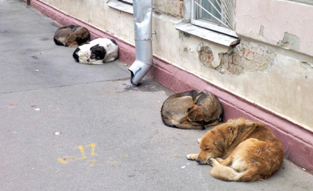 Les chiens errants, un problème persistant à Casablanca