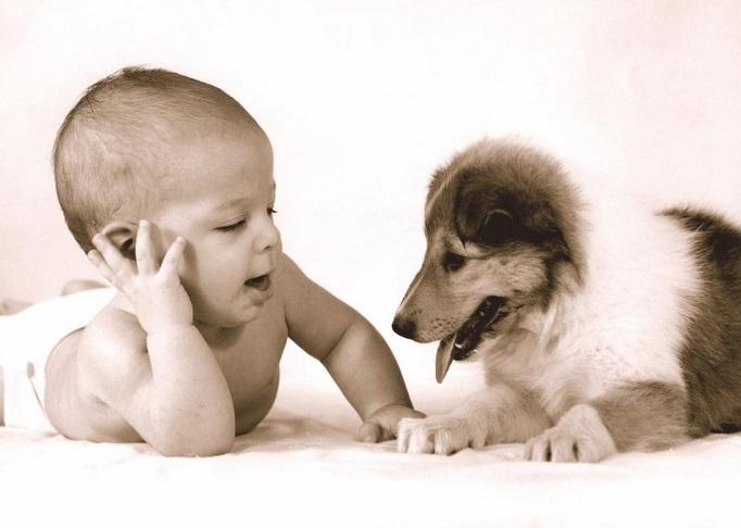 La fable du chien et du bébé