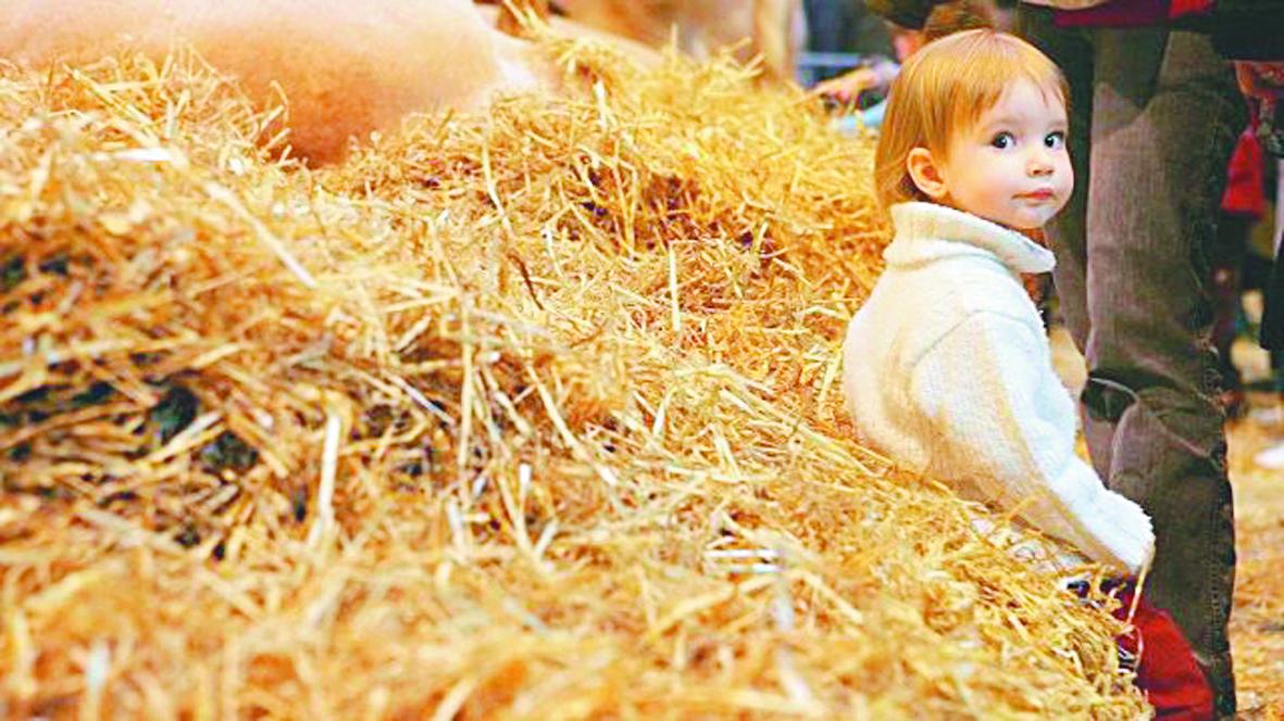 La poussière dans les fermes prémunit contre l'asthme et les allergies