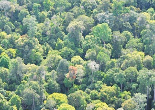 Les forêts tropicales en danger
