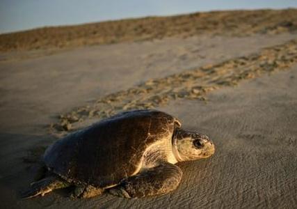 Insolite : Oeufs de tortues