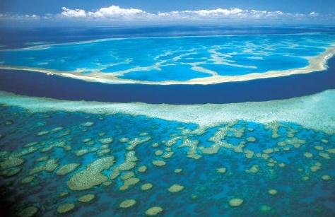 El Niño menace le corail
