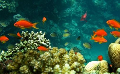 Les récifs coralliens menacés par le réchauffement et les crèmes solaires