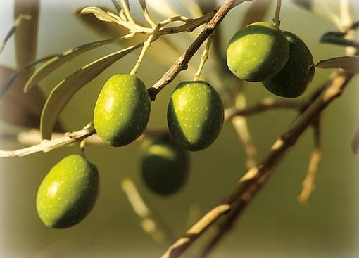 Journées de sensibilisation et de formation  pratiques au profit des professionnels de l'olive