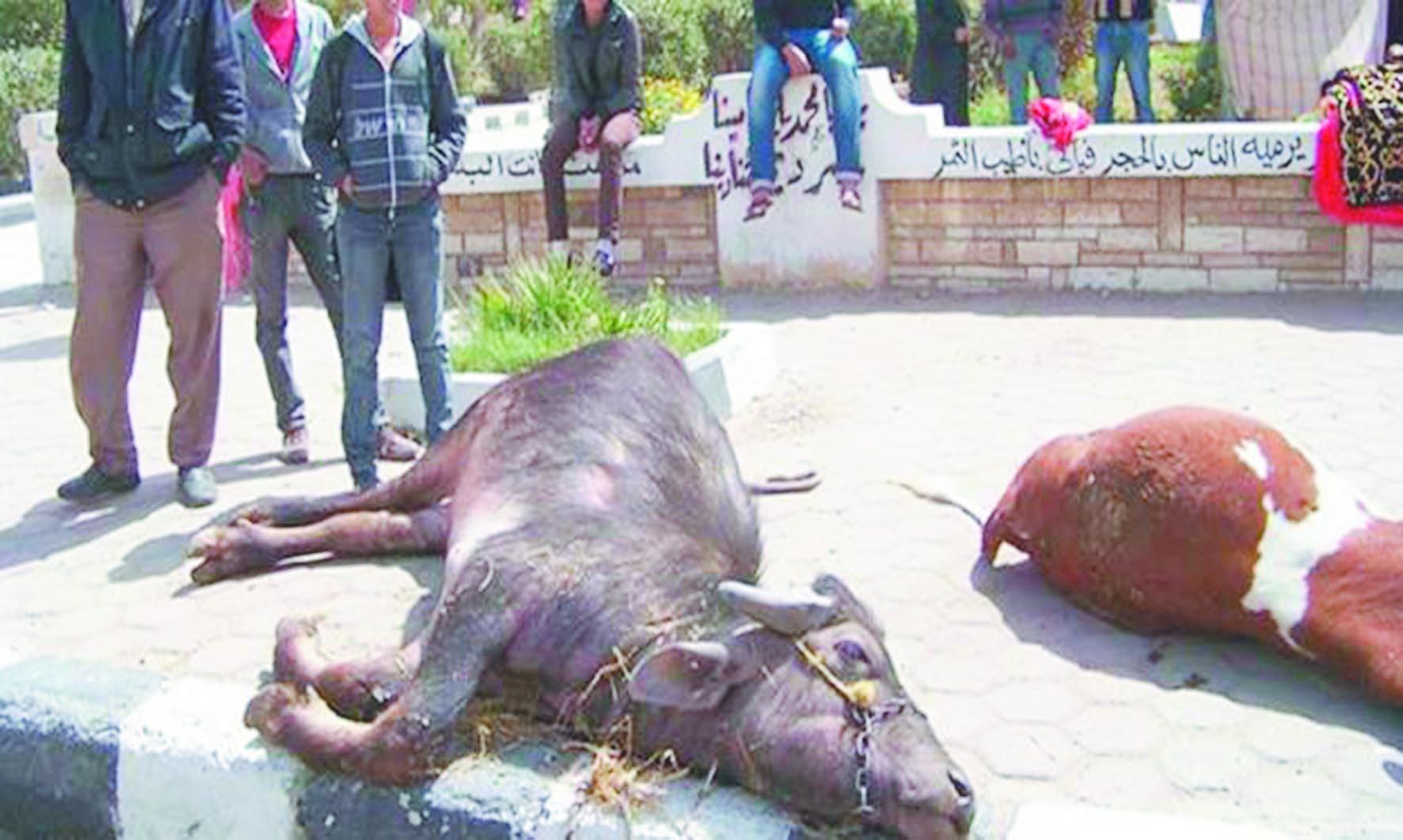 Bêtes malades  et éleveurs inquiets