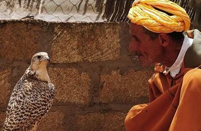 """Le Maroc, seul pays africain et maghrébin présent à une exposition sur """"L'art de la fauconnerie"""" à Lisbonne"""