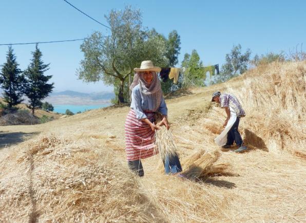 Quelles marges de manœuvre pour l'agriculture marocaine face à la contrainte hydrique ?