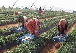 Rencontre à Kénitra sur les violences à l'encontre des femmes du secteur agricole