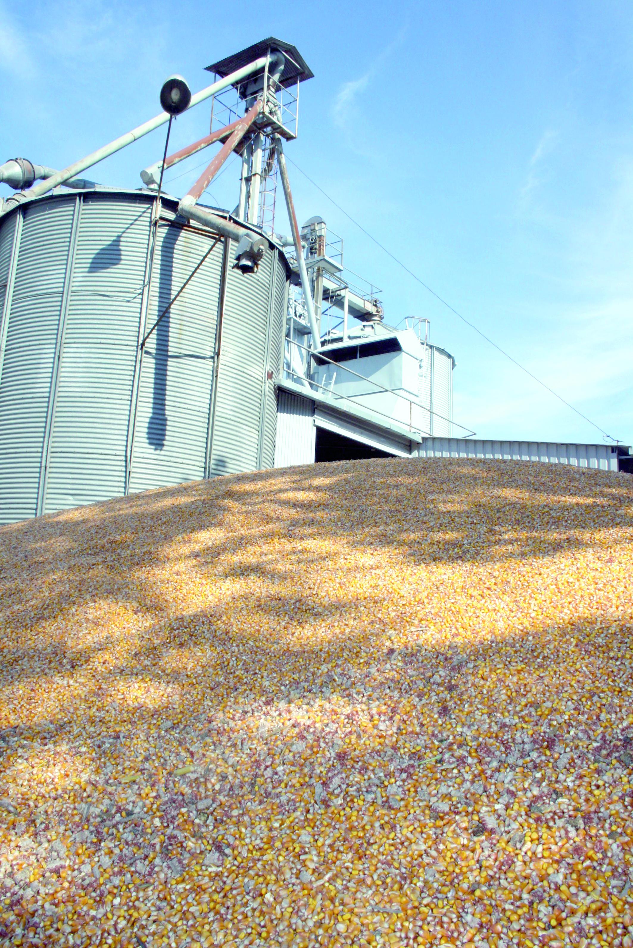 Modification de la quotité du droit d'importation du blé tendre