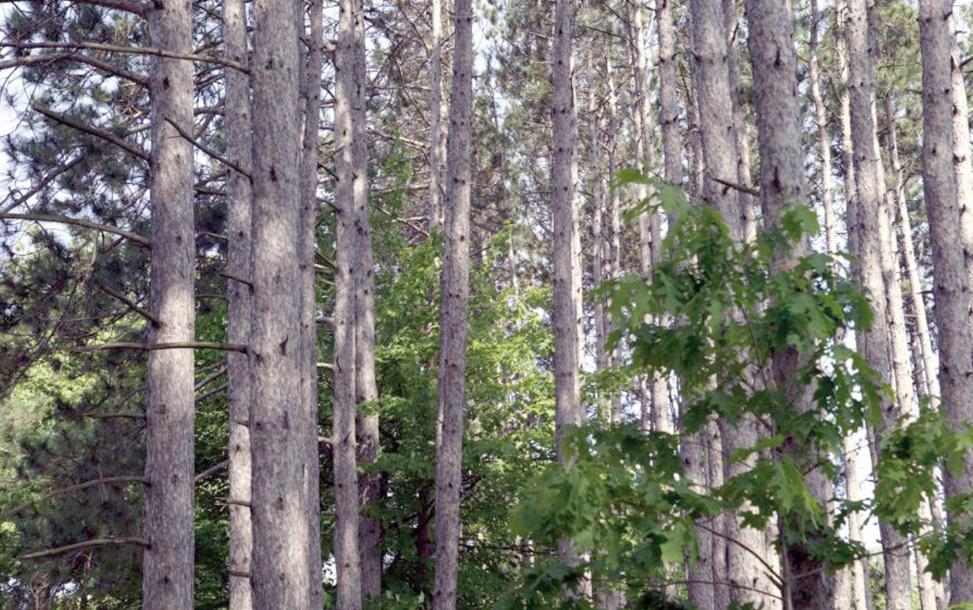 Coopération entre le Maroc et les Etats-Unis dans le secteur forestier