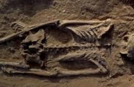 """Un """"massacre de masse"""", il y a 10.000 ans déjà"""