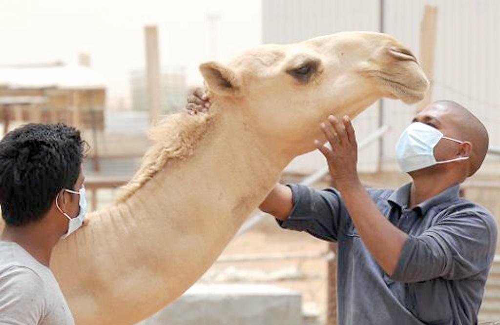 Une feuille de route pour maîtriser les maladies zoonotiques