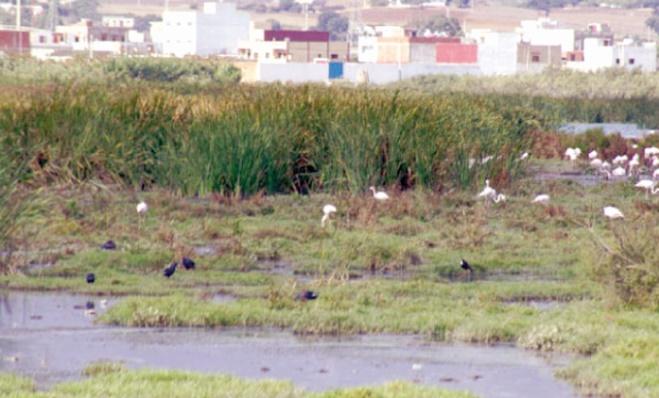 Le Maroc subit d'importants effets de dégradation de ses zones humides