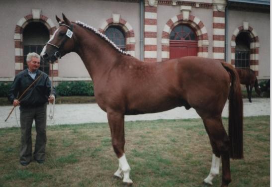 Assurer un meilleur encadrement des éleveurs de chevaux