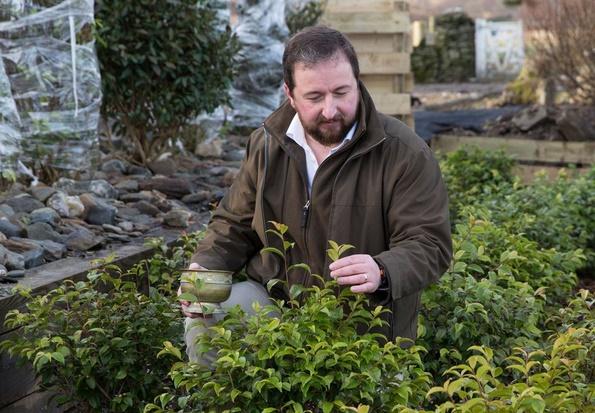 En Ecosse, un thé d'exception pousse au pied des Highlands