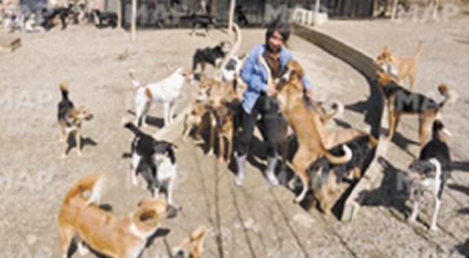 Salima Kadaoui, la militante de la cause animale